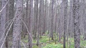 RECHERCHE LOTS FORESTIER AVEC BOIS MATURE DE 100 ACRES ET PLUS