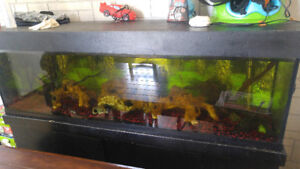 Aquarium 125 gallons 6 pied de long