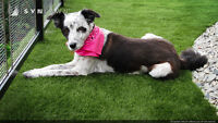 SYNLawn Synthetic Pet Grass/ Dog Runs