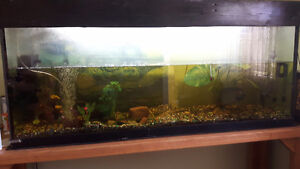 125 Gallon Aquarium, stand and accesories for sale