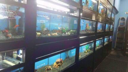 Fish, Axolotls, Frogs, Insects, Shrimps, Hermit Crabs P&K Pets