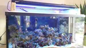 80 gal salt water aquarium  $1300 obo Campbell River Comox Valley Area image 1