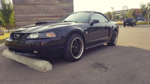 2004 mustang gt 40th anniversary (reduced)