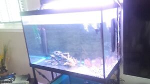 65g tank in excel condition + METAL STAND + DUAL T5 LIGHTS