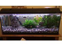 fish tank and set up