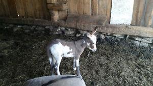 9 minI  donkeys