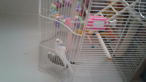 Parakeets with cage and toys