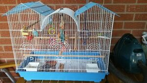 Young Female Blue Budgie and Large Cage & Toys in Richmond Hill