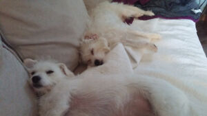 bonded pair for adoption must be adopted together