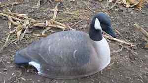Geese decoys! 6 pak Kitchener / Waterloo Kitchener Area image 1