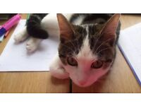 Trained female cat ( Luna ) ,