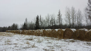 Oat Bales for Sale