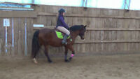 Fancy 13.2h hunter pony for sale