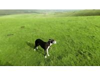 Brighton Pet Care : Dog Walking, Cat Feeding & other Small Animal Care in the Brighton & Hove Area