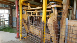Hydraulic cattle squeeze with scale.