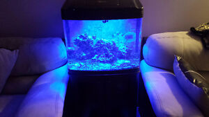 FS: 29 gal biocube with add-ons LOWER PRICE