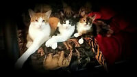 URGENT! Looking for a foster home for cats Jan-Aug