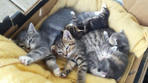 Rescue Farm Kittens in need of new homes! - updated