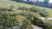LOW CHEAP PRICES BRANCHES REMOVAL and tree cutting 780-807-7634