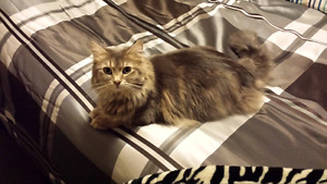 Free 2 year old cat