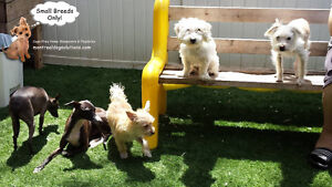 SINCE 2010 **Small Breed Dog Playdates,Sleepovers (No Cages)** West Island Greater Montréal image 1