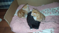 Baby kittens almost ready and mom to give away