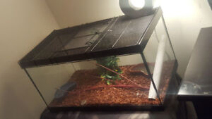 BABY CRESTED GECKO WITH TERRARIUM AND ACCESSORIES