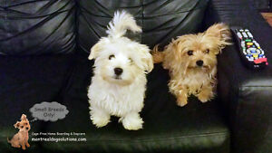 CAGE-FREE BOARDING SMALL DOGS IN HOME OF TRAINER
