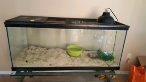 Amel corn snake and cage