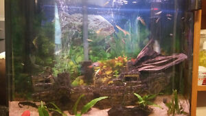 Aquarium and fish with many extras!!!