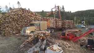 Dry firewood St. John's Newfoundland image 6