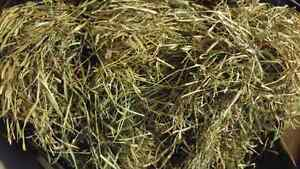 Grass Hay, great for feeding small animals!