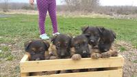 KENNEL HELPER - DOGS, CLEANING, UPKEEP, GROOMING