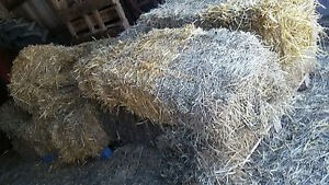 Hay and Straw for Insulating - small squares