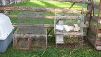 RABBIT CAGES IN GOOD SHAPE
