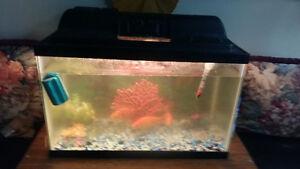 For sale fish aquarium 20 GL running  great condition