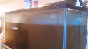 90 Gallon fish Tank for Sale