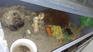 Hermit crab with everything