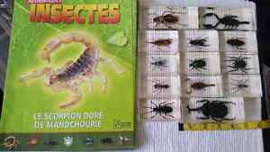 Collection d insectes Saguenay Saguenay-Lac-Saint-Jean image 2