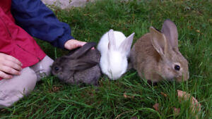 Rabbits - 10 weeks old Oct 15