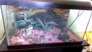Fish tank and accessories! Price reduced to $30