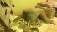 Reptile Re Homing