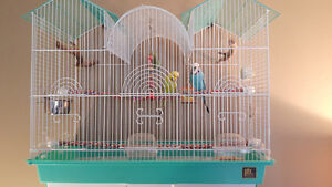 $50 obo Two budgies and all supplies