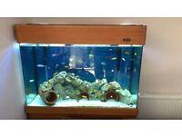 Full set up aquarium / fish tank