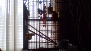 i have a bird with cage some toys and some food