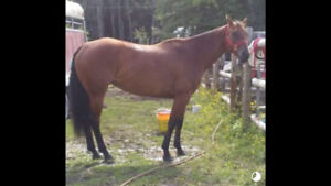 Good horse for sale