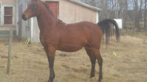 Awesome horses for sale