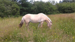 Looking For a Large Pony/Small Horse