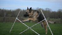 Dog Agility Jumps