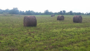 Hay for sale - Red clover - 4 x 5 bales